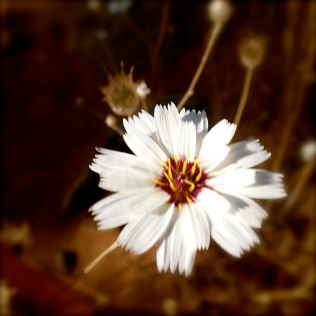 Fleurs du Jbel Saghro (2015)