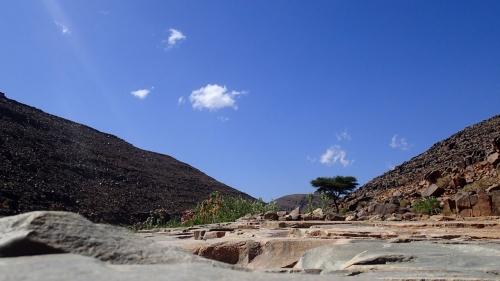 saghro,trek,randonnée,sauvage,botanique
