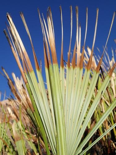 plante sauvage,nature, désert,botanique
