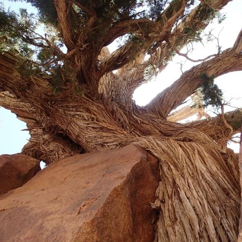 tree,arbre,nature,désert