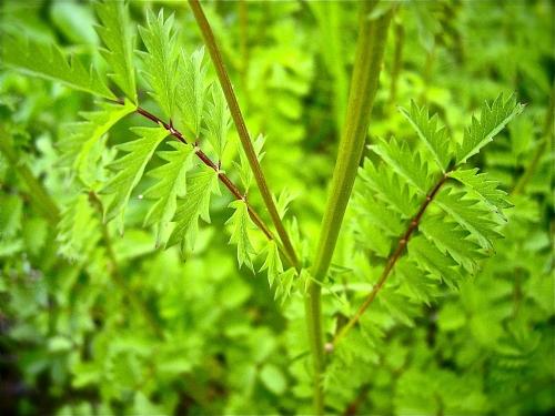 plante,cuisine,botanique,phytothérapie,herboristerie,gastronomie