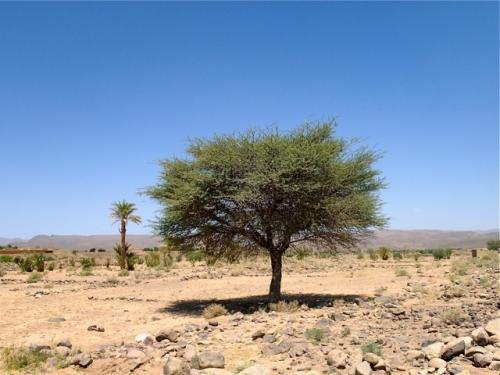 arbre,trek