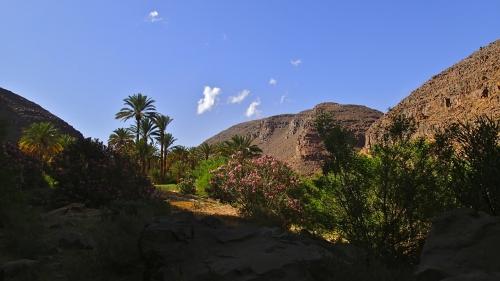 jardin naturel, paradis, désert, oasis
