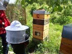 permaculture,enfants,abeille,ruche,apiculture