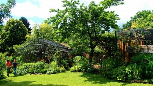 jardin,fleurs,plantes,merveilles