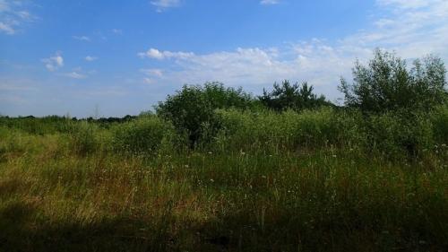 plante,botanique,nature,écologie