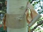 arbre,écorce,plante,