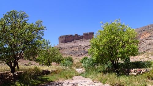 trek,plantes,nature,désert