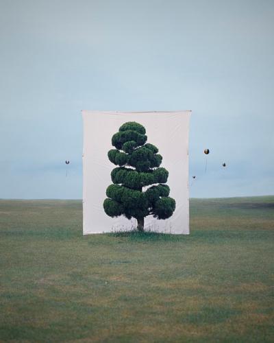 arbre,tree,wild plant