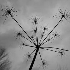 art,botanique,