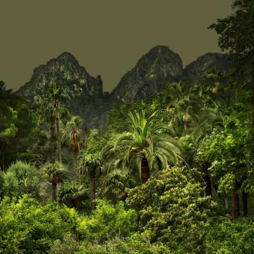 écologie,plante,art,artiste,nature,voyage,photographie