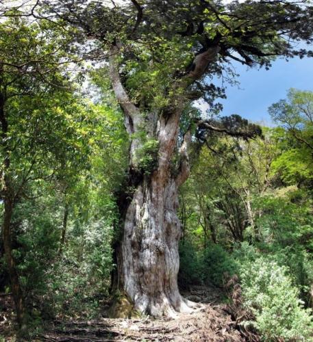 arbre,insolite,japon