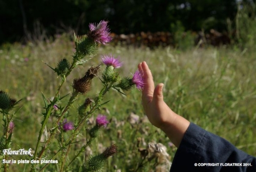 enfants, botanique