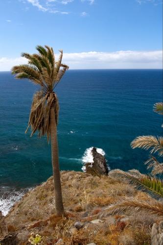 palmeria canaria_ccby2_javiersanp.jpg