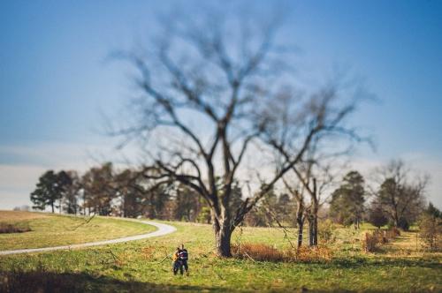 arbre,photo,nature,mariage