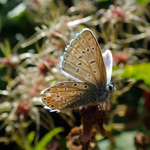 insecte, papillon