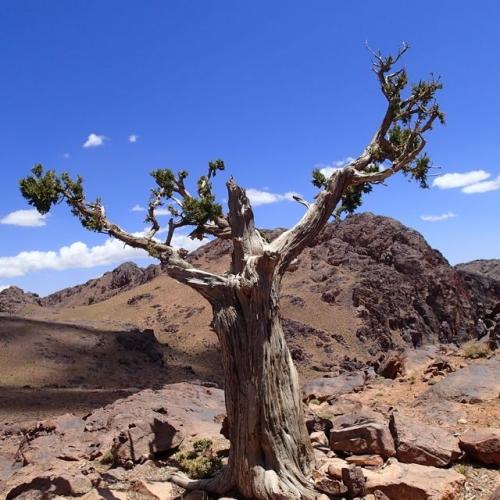 arbre,sacré