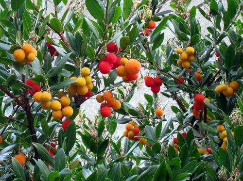botanique,cuisine,plante sauvage