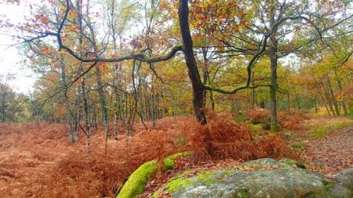 forêt,bois, nature, sauvage,