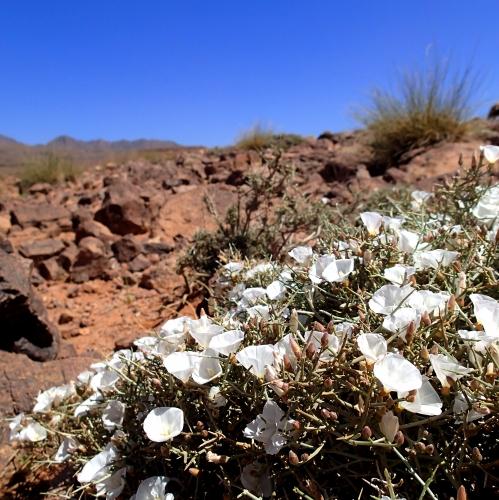 plante,botanique,désert